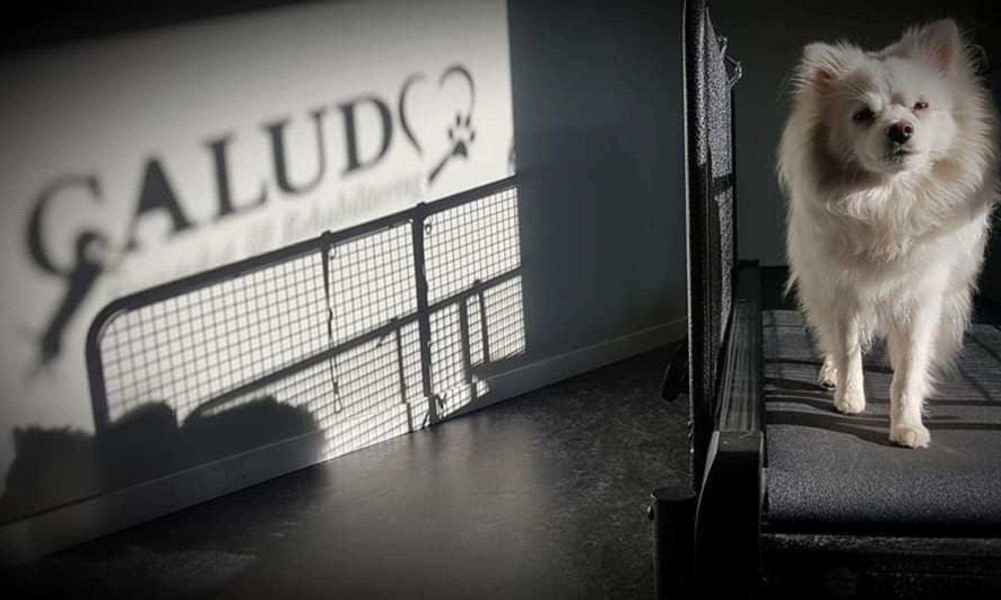 CALUDO Hundfysioteket & Rehabilitering